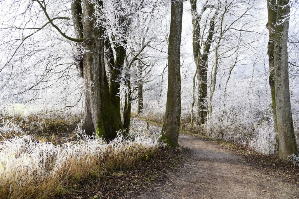 Ein gefrorener Wald mit Frost und Schnee