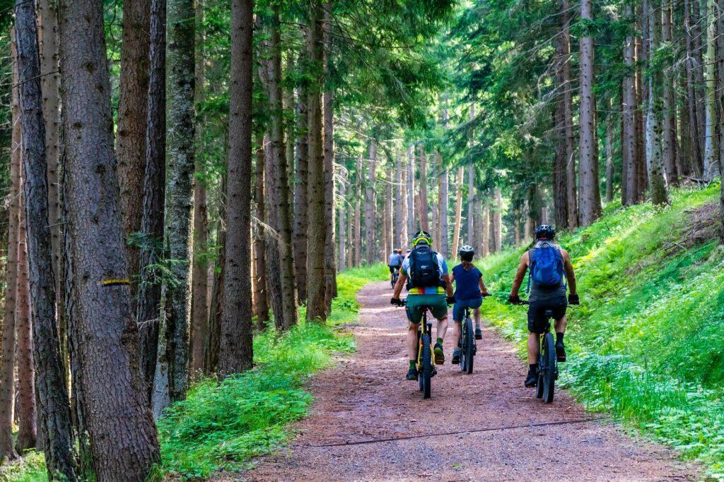 Fahrrad Wald